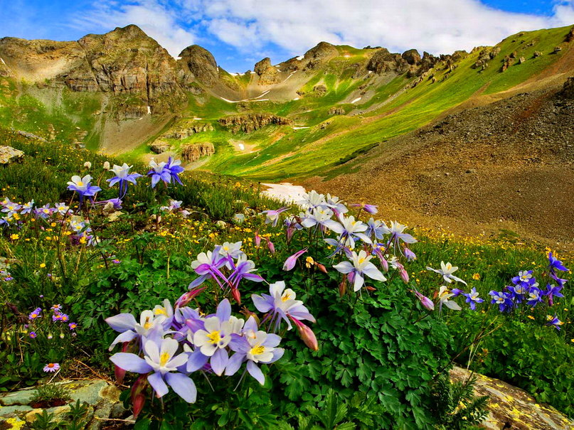 257643__lovely-mountain-flowers_p