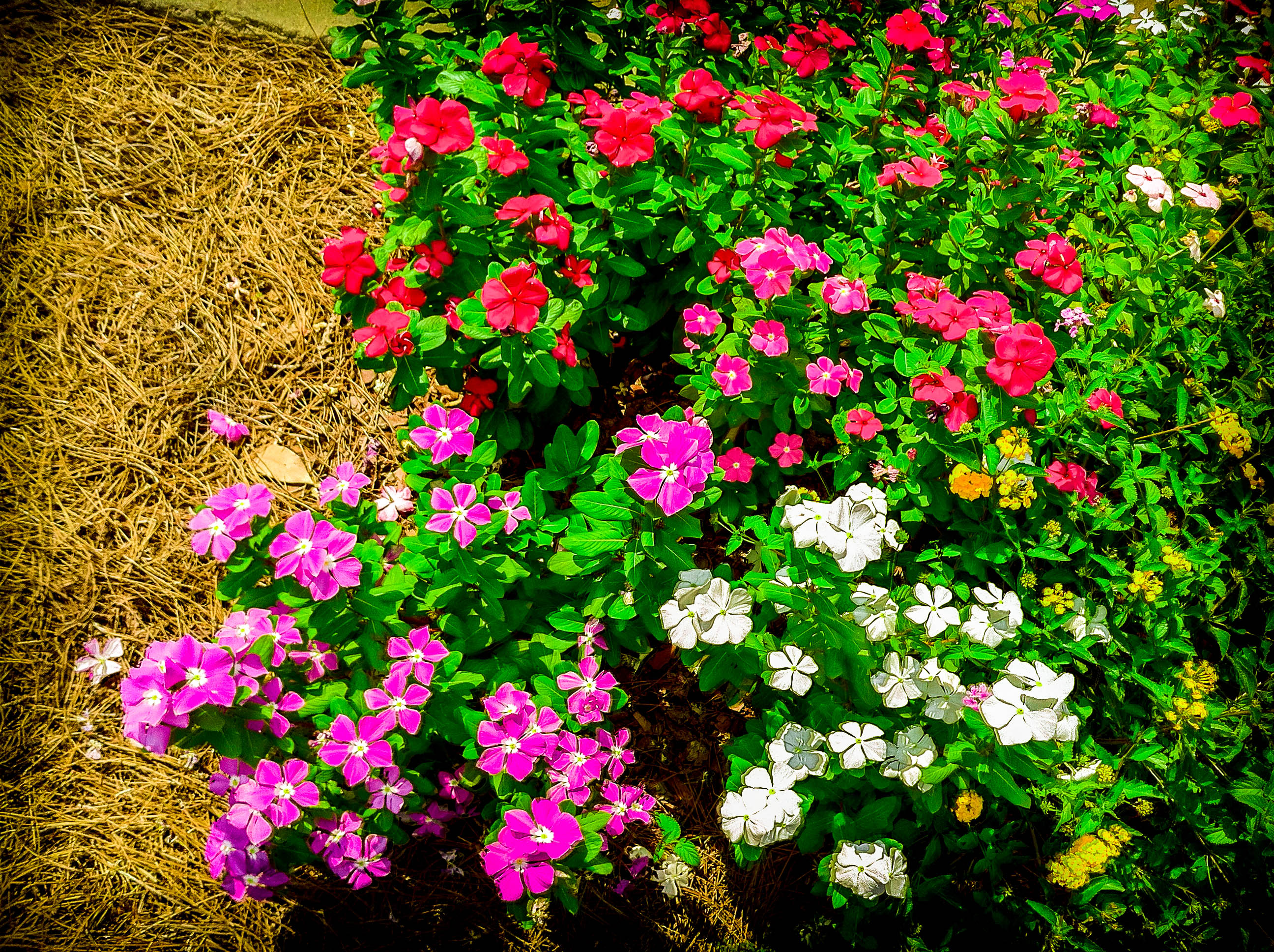 lr4-retouched-colorful-flowers-img01