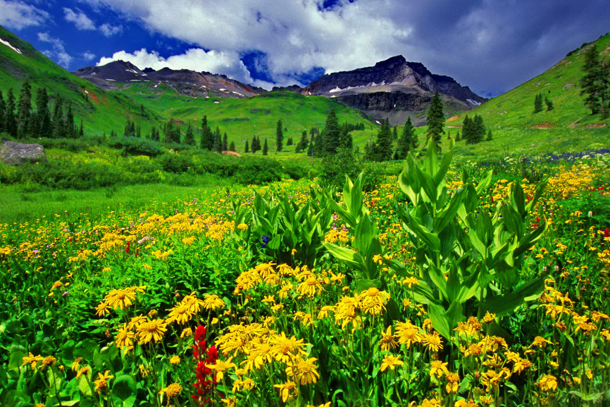 mountain-greenery-and-flowers